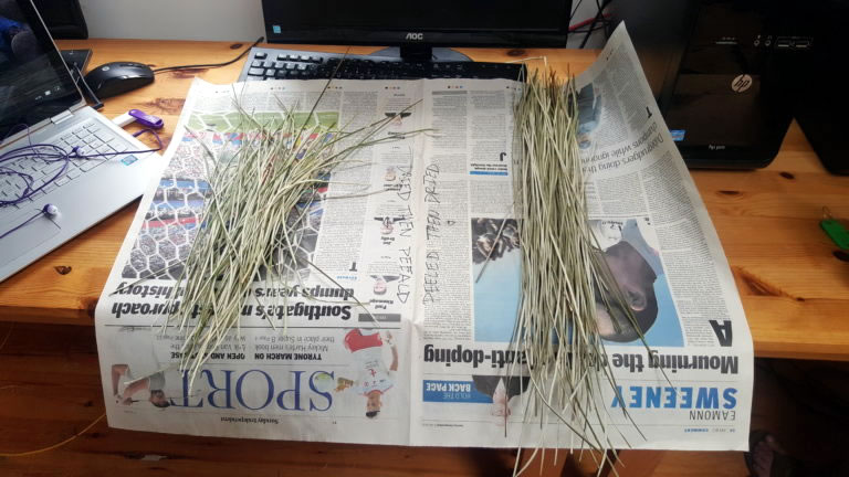 Two groups of rushes laid on newspaper